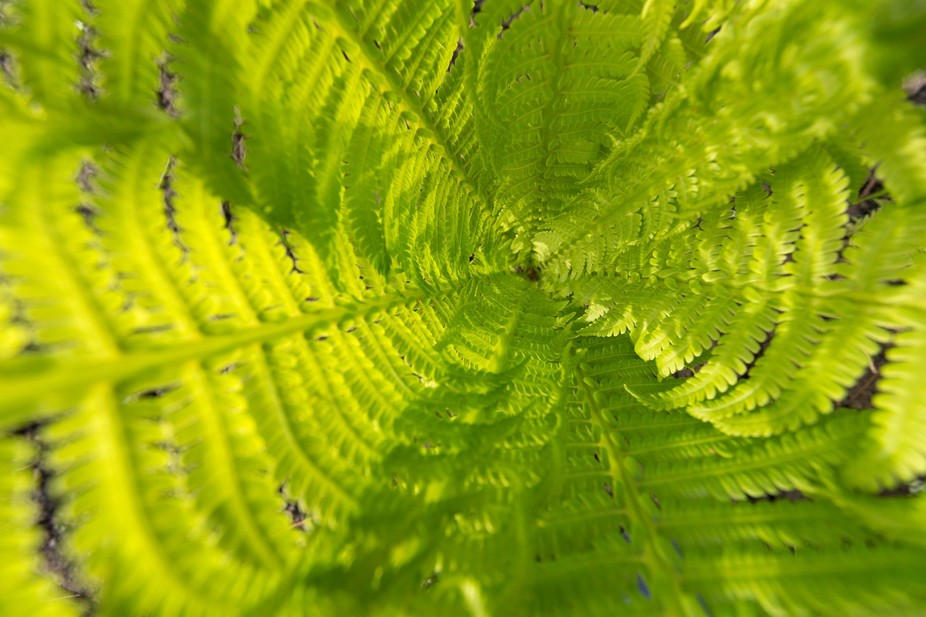 Sunlight through the textural fern leaves