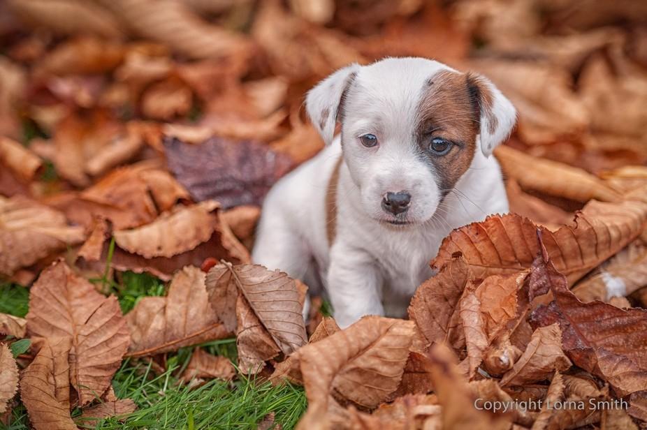Puppy Pose