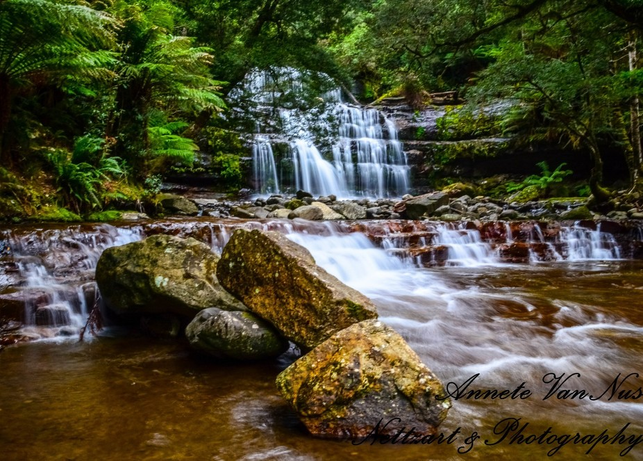 The beautiful Liffey Falls in Tasmania. I fell in love with this place , the serenity , enchantme...