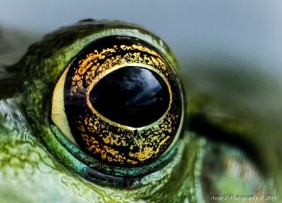 I am keeping my eye on you