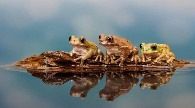 adventure by bridgephotography - Reptiles Photo Contest