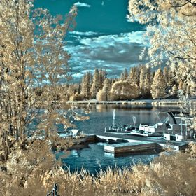 This was taken late summer.  Shot with Nikon converted to infrared.