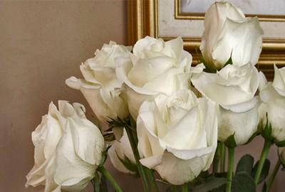 white rose 2 4 x 6