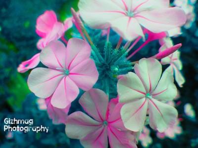 Floreals