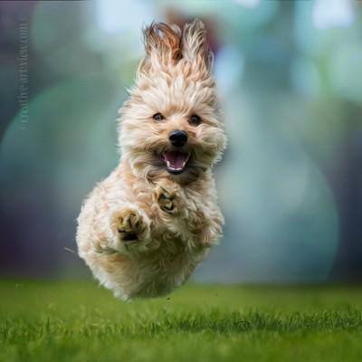 jump like a bunny