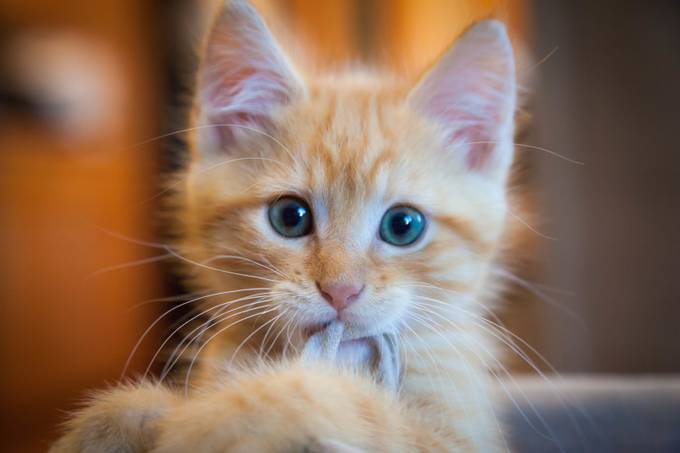 Felix Sept 6, 2014 034 by Catnado - Kittens vs Puppies Photo Contest
