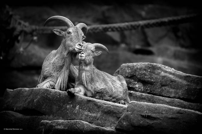 Love on the Rocks by Marshal - High Contrast In Black and White Photo Contest