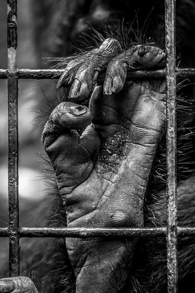 monkey hand 2