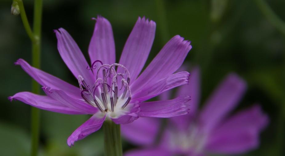 Fort Hood, Flower Garden 7