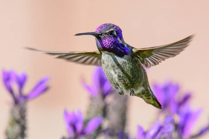 image by rewanick - Just Hummingbirds Photo Contest