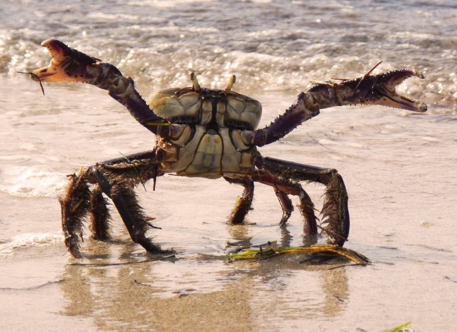 Come at me crab