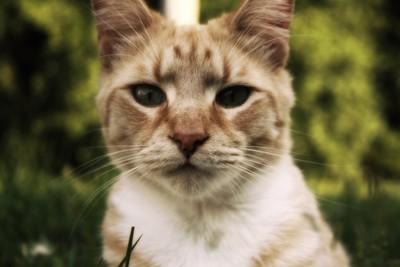 babascat
