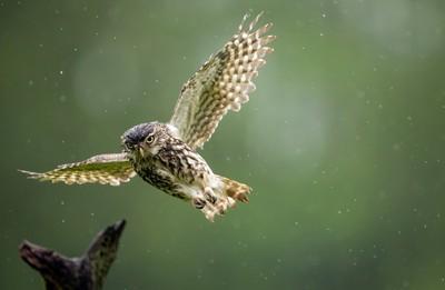soggy flight