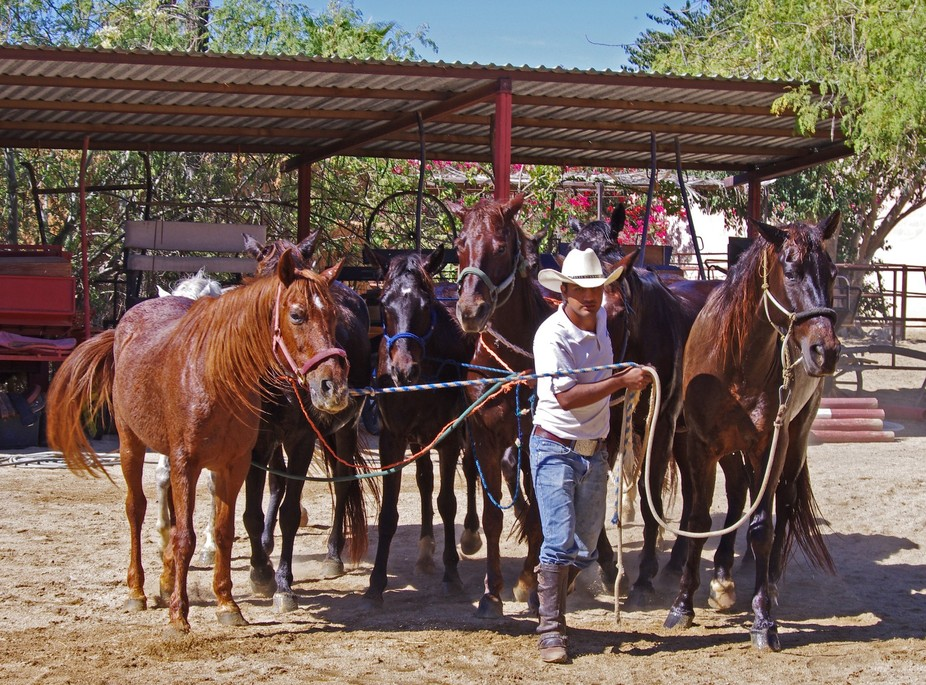While on vacation in Cabo San Lucas, I rode at a wonderful dressage training center cum rental st...