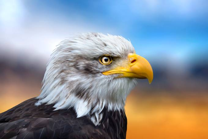 EyePet/iPad by DaGeo - Just Eagles Photo Contest