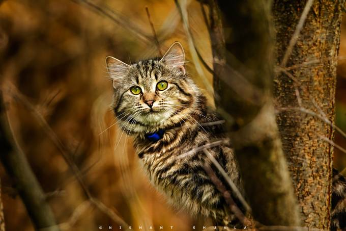 Smile Zoe Smile by Nishant-101 - Feline Beauty Photo Contest