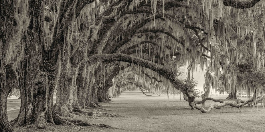 While looking for venues to shoot, this magnificent site, an old South Carolina plantation entryw...