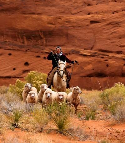 Effie Herding Sheep MV