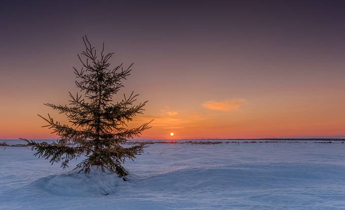 Lonely Christmas tree by alechickman - Silhouettes Of Trees Photo Contest