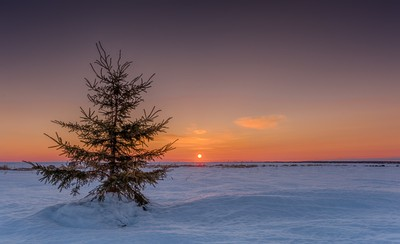 Lonely Christmas tree