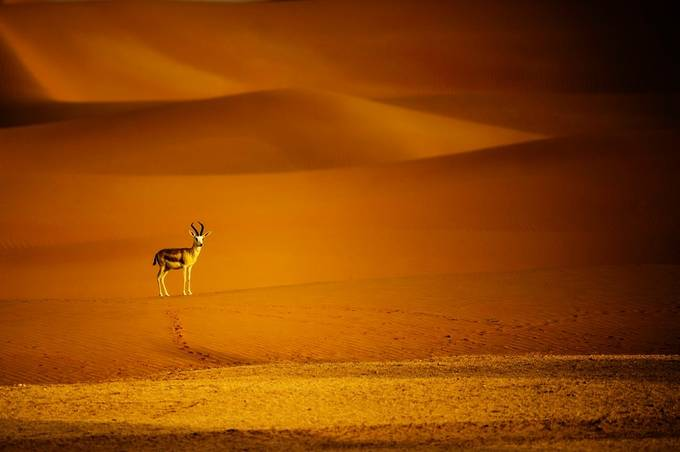 Life in the Empty Quarter by ginawi - The Emerging Talent Awards