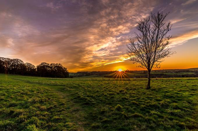 Bunny Hill - Tree at Sunset by ianwatts - Meadows Photo Contest