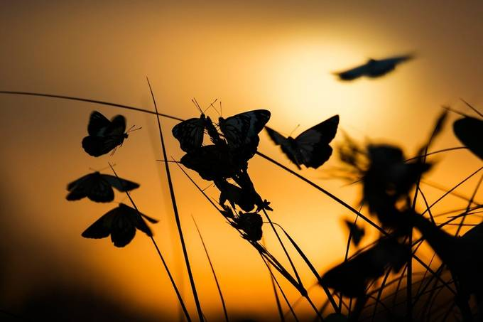 butterfly party by PatCliffordPhoto