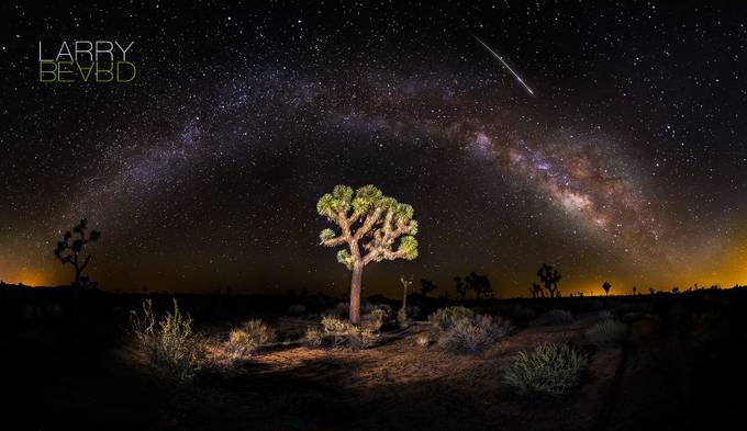 Lyrid Meteor Falling (Over Joshua Tree)  by larrybeard - A Lonely Tree Photo Contest