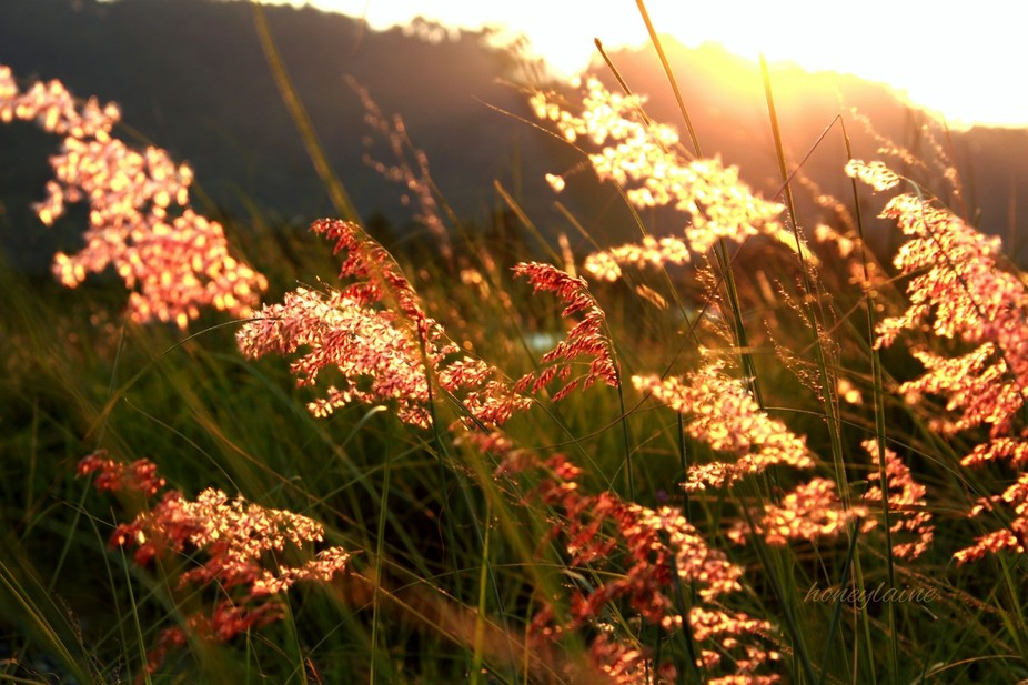 the weeds joyfully dancing with the sun and wind ..