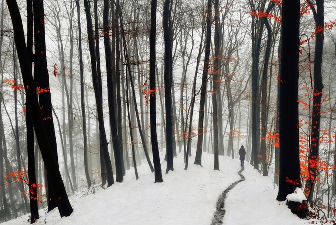 Through autumn and winter by SamantaKrivec - People In Large Areas Photo Contest