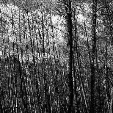 Black ands White Trees