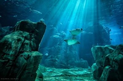 Underwater fly