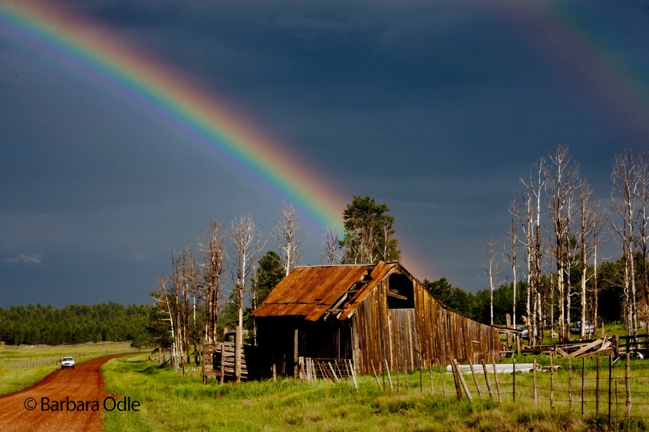 Under the shadow of the San Francisco Peaks in North Central Arizona USA, this neglected barn is ...