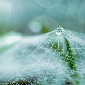 A large spider web on the ground, between blades of grass, a pioneer has formed water drops.