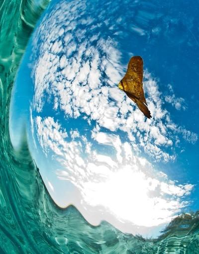 batfish in the sky