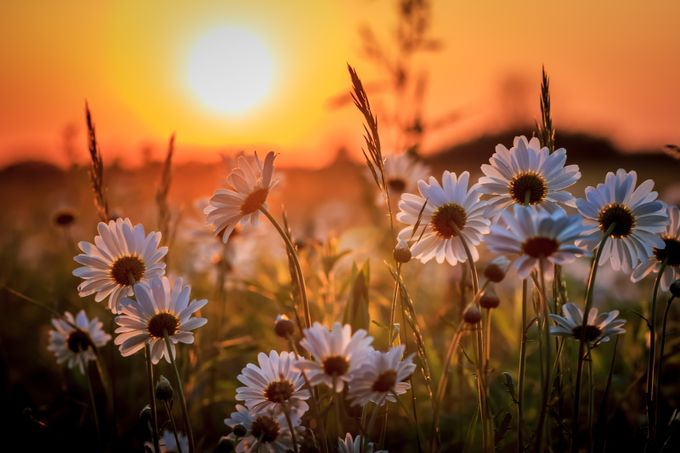Prairie Sunset by Mike_M_Martin - Image of the Year Photo Contest by Snapfish