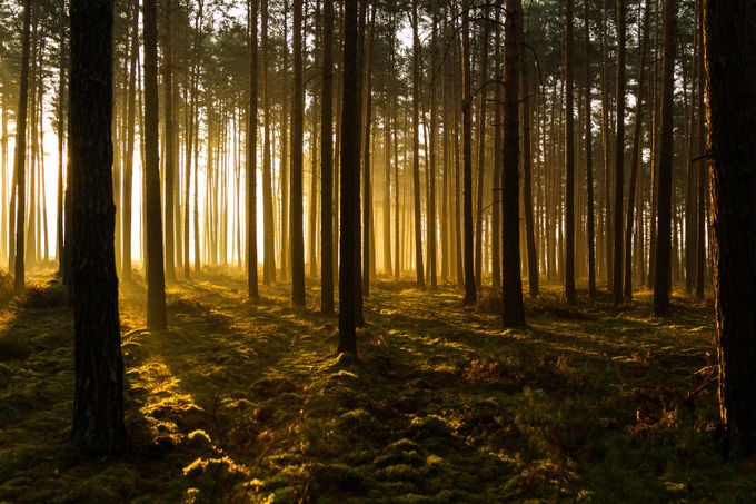 Filtered Gold by LeeBennett - Divine Forests Photo Contest