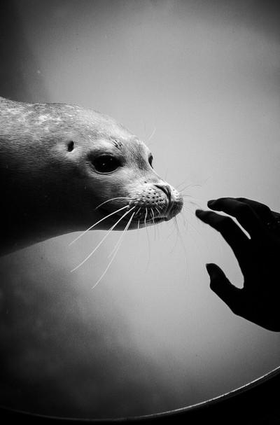 Nosy Seal