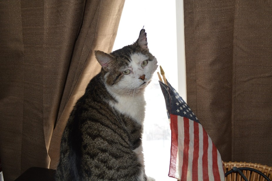 This cat was in a fight, grounded and longing to get back to his freedom.