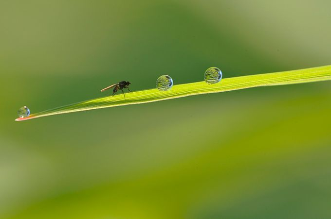 dewdrops by LucBaekelandt - Composing with Negative Space Photo Contest