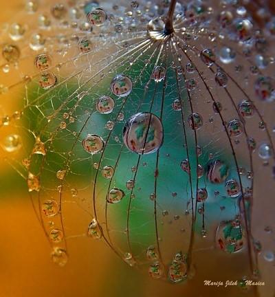 DSCN1853 VB  Joyful Dance Of The Playful Drops