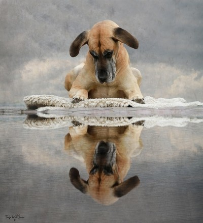 Mirror, Mirror in the lake.