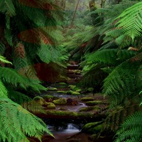 Rained all day - virtually no one was around ... Tranquillity!  Australia has some brilliant rainforests in  Victoria, the fresh crisp air is sec...