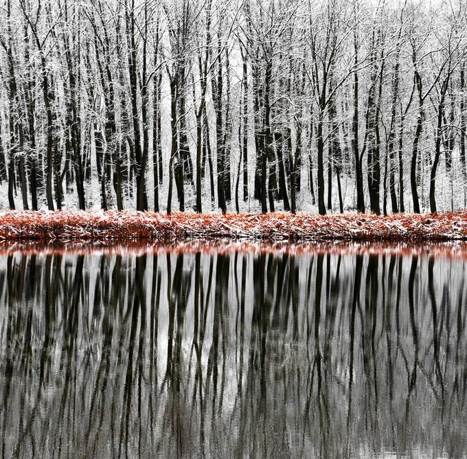 Winter Reflections by PhillipMinnis - Divine Forests Photo Contest
