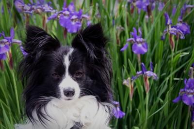 Likko's Flowers