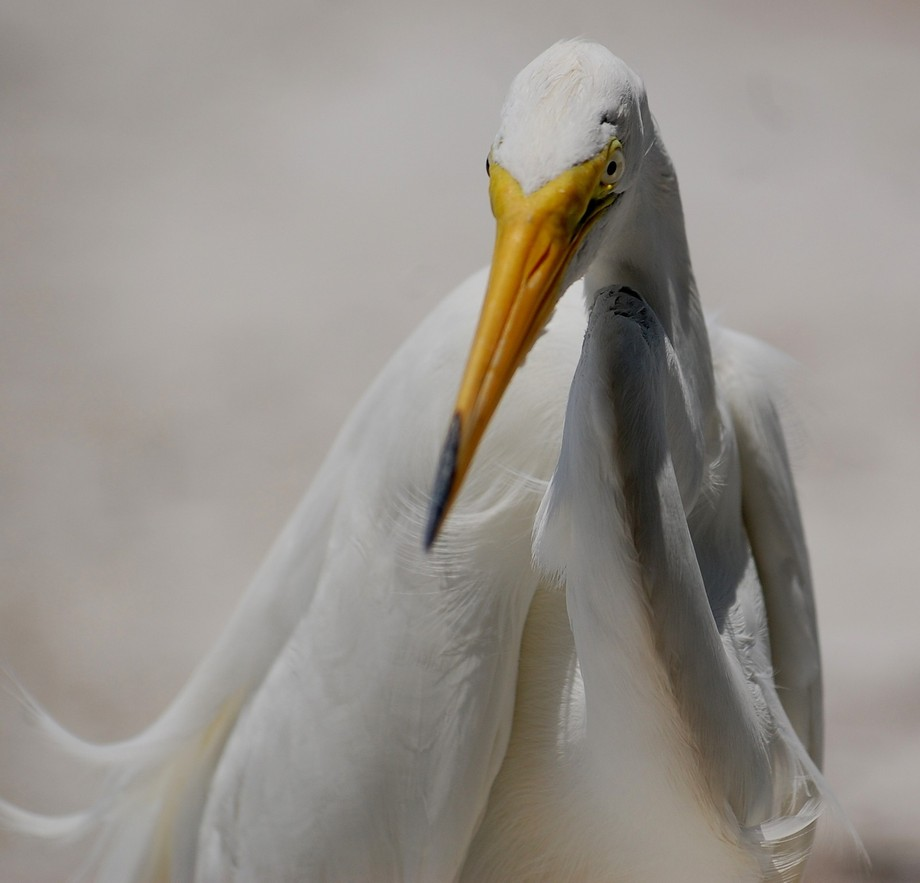 Heron Close-up