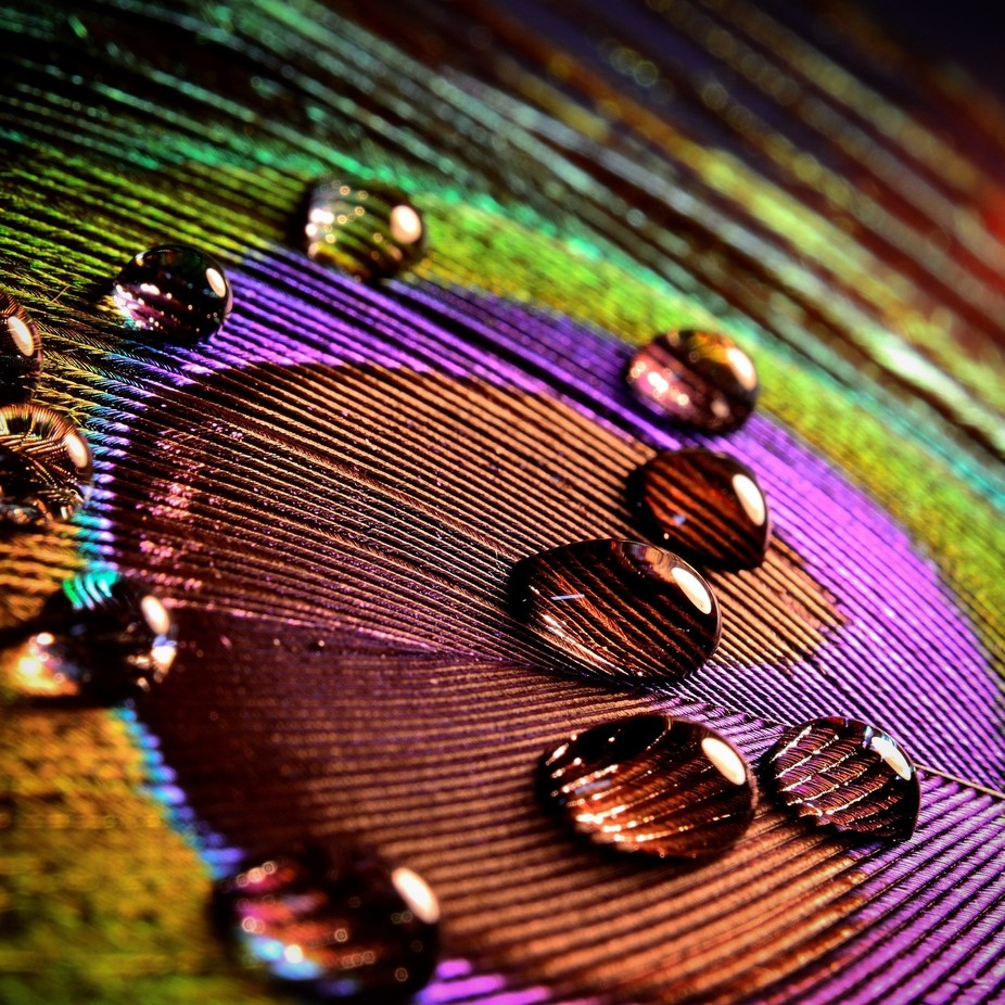 Macro on Feathers by Seanie2322 - Macro Water Drops Photo Contest