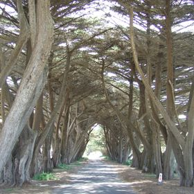 Tree lined avenue at the Quarantine station in Morninton Victoria
