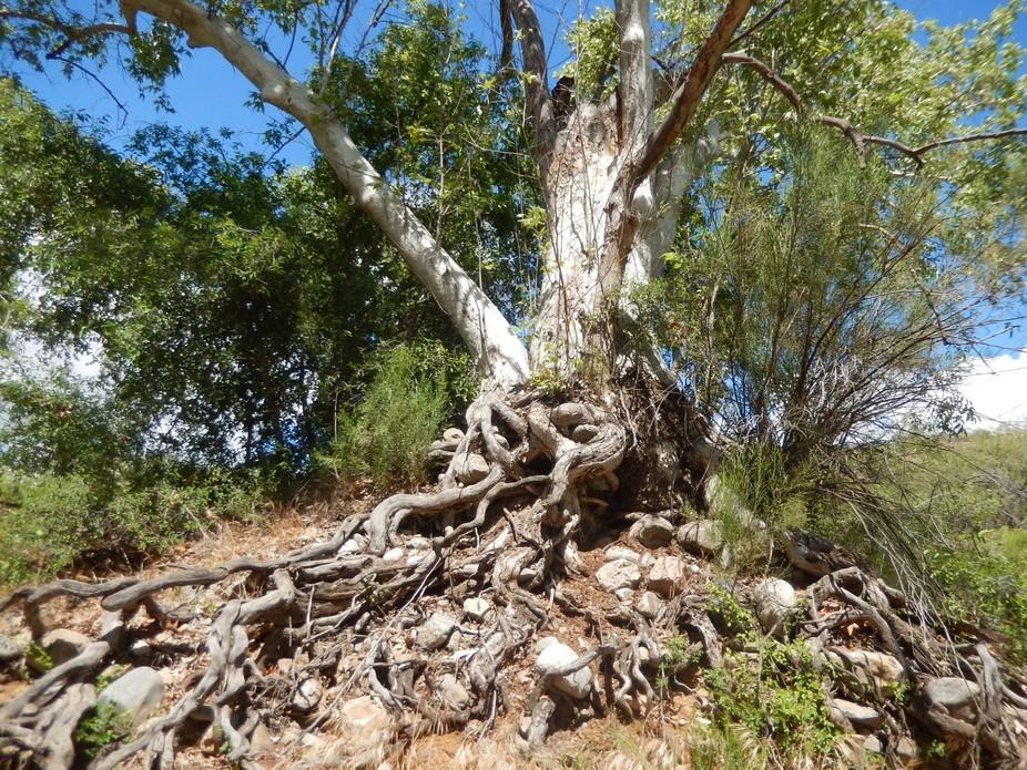 Oak Flat campground 2015 424