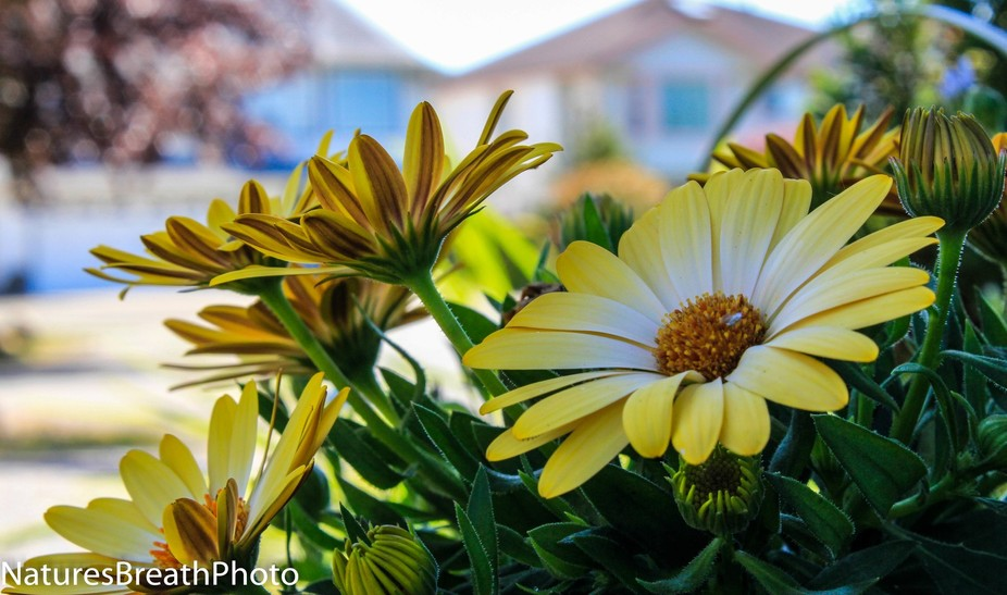 natures lovely yellow blooms in spring